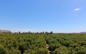 Продажа виллы в провинции Costa Blanca North, Испания: 2 спальни, 85 м2, № RV8016IJ – фото 18